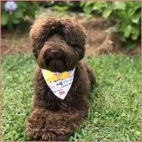 We offer a wonderful opportunity to local families that allows them to own one of our dogs at a fraction of the purchase price. Please click below for more information and email us if you're interested! ...continue reading