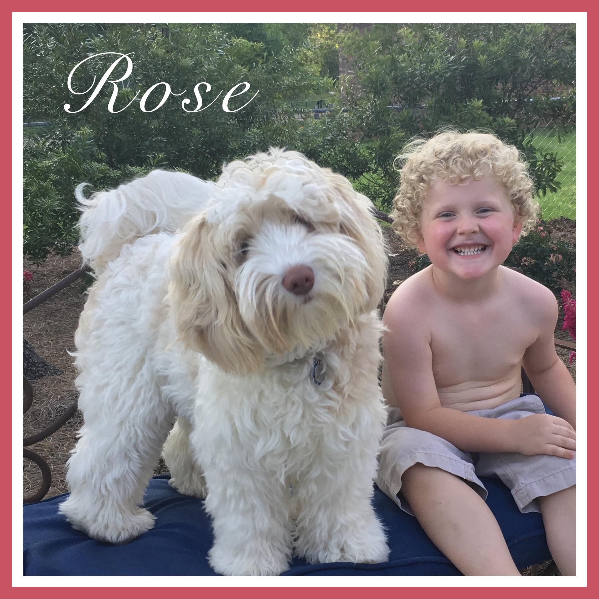 Rose Wade website OD