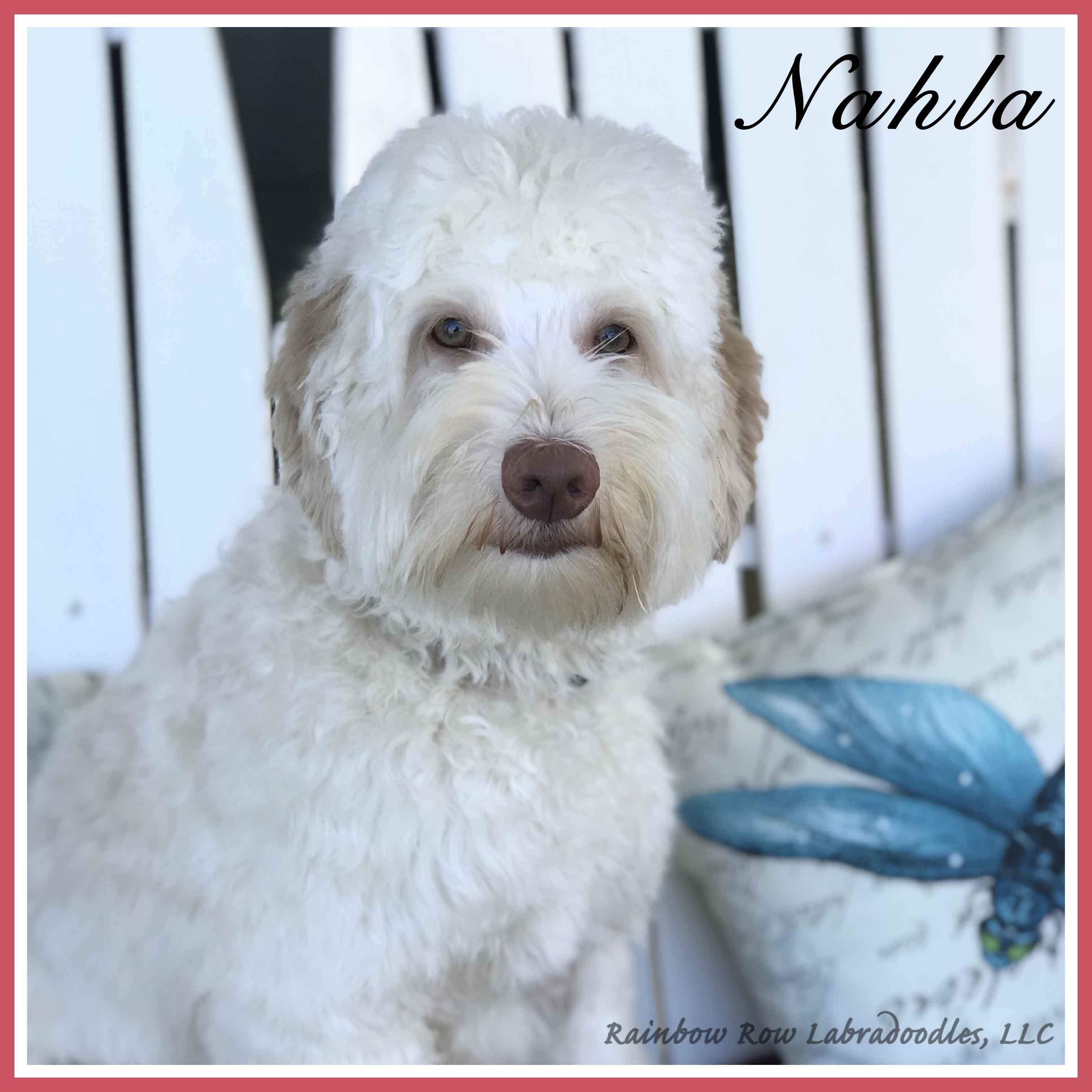 Nahla website eyes sq