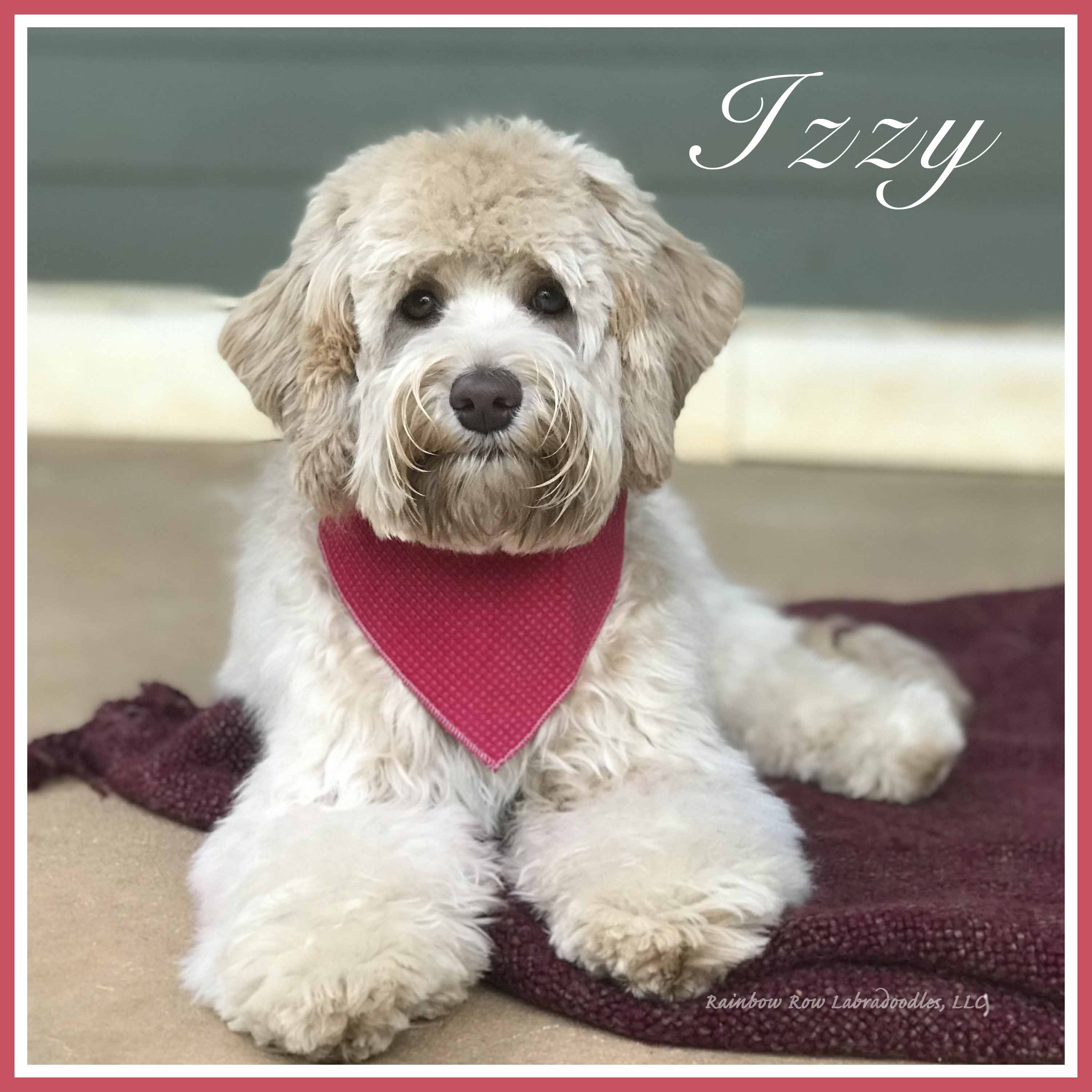 Izzy sq website