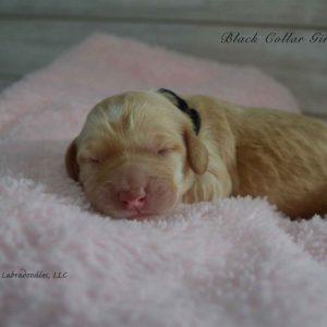 black newborn millie and artie 1
