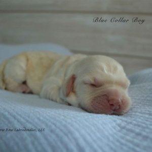 blue newborn millie and artie 1