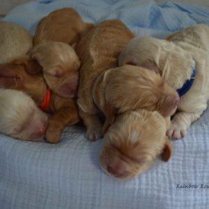 newborn litter millie and artie 1
