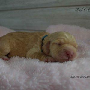 teal newborn Millie and Artie 1