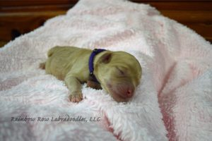 Nahla 2 purple newborn